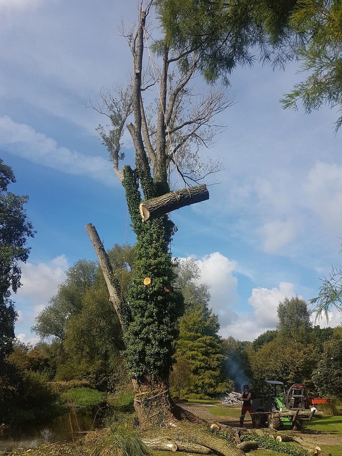Tree Care Hampshire