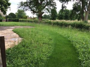 Professional Arboriculture & Landscaping