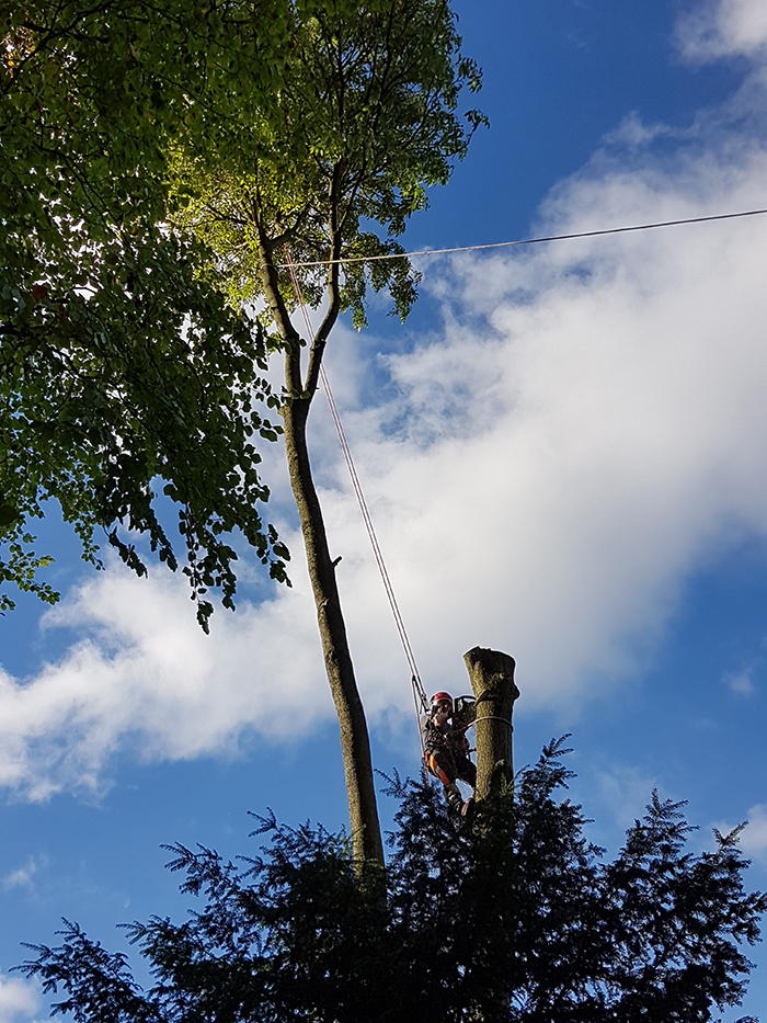 Arbor Tree Service