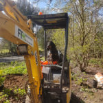 Tree Care Hampshire