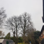 Tree Surgeons in Hampshire