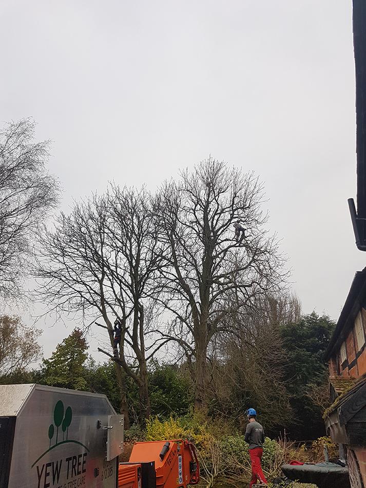 Tree Surgeons in Hampshire